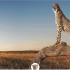 Галерея Envira – плагин wordpress + 28 адд-онов